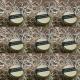 Regenerujący kokosowy  balsam do ust z 24 k złotem